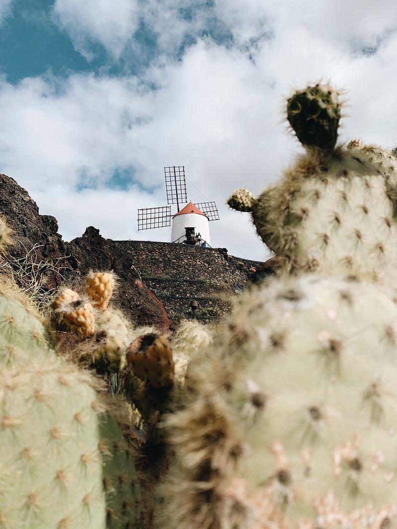 Jardin-de-cactus-manrique-photo-credit-by-TheLostAvocado cosa vedere a lanzarote Isole canarie quale scegliere
