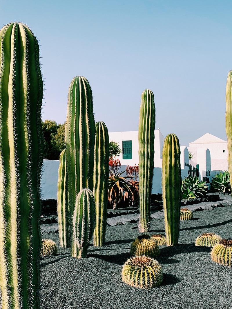 Foto di la geria, articolo su cosa vedere a Lanzarote di The Lost Avocado Isole canarie quale scegliere