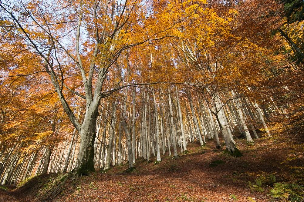 Foreste casentinesi paesaggi piu belli in italia shutterstock